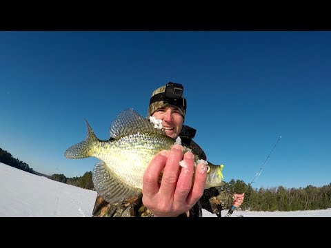 Ice Fishing Crappie Tips - This Bait Is Catching  Crappie Right Now!