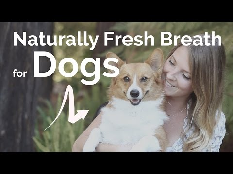 Sweet Bark: The Remedy for Your Dog's Bad Breath!