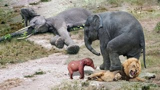 Amazing Elephant Herd Protect Mom & Newborn Elephant From Lion Pride Hunt, Elephant Giving Birth