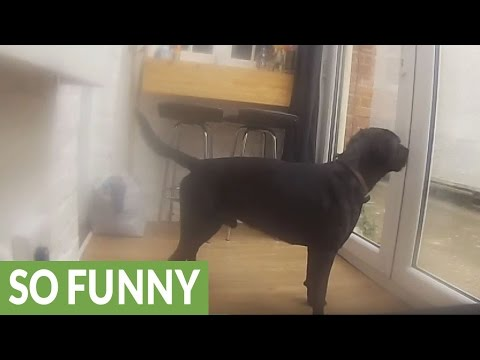 Dog really hates being left alone