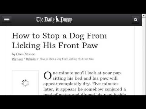 How-To Keep A Dog From Licking An Injured Paw