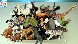 Huge Toy Zoo Wild Animals Collection - Learn Animal Names For Kids