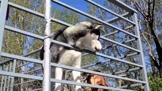 Tamaz Elizabarashvili Dog shelter  tbilisi 2015 (bu Ruslan Mamedov )