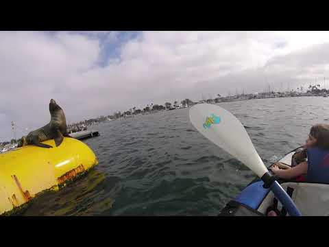Charlie seals watching in mission bay ca. oct 8 -17
