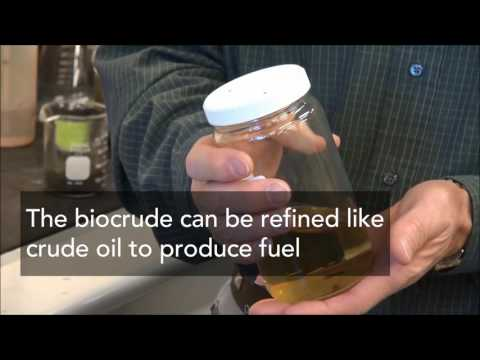 From the Toilet to the Tank – Biofuels from Sewage