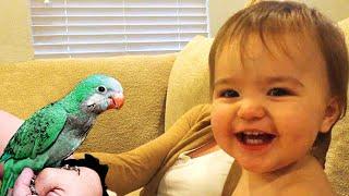 El momento más divertido entre bebés y loros #2 🐦🌻👶 Video de mascotas y bebé divertidas