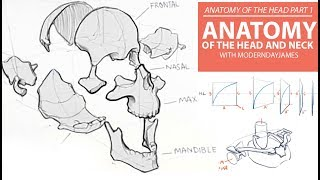 ANATOMY OF THE HEAD PT. 1: BONEY ANATOMY