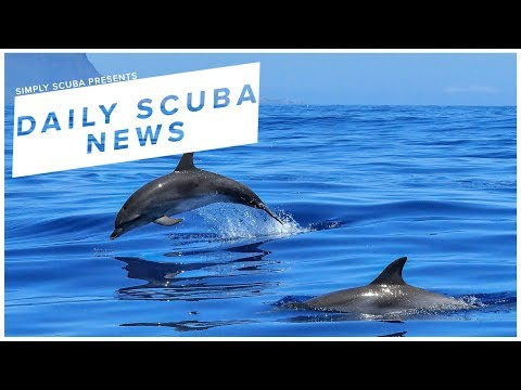 Daily Scuba News - CSI Are Now Investigating Dolphin Deaths