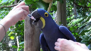 Zoo animals miss their visitors amid coronavirus pandemic   AFP