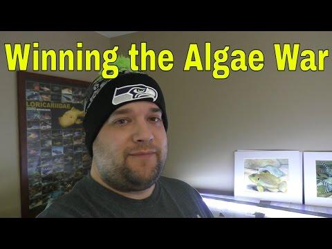 A Day in the Fishroom 5 🐠 Algae Update 🐠 String Algae, Hair Algae, BBA