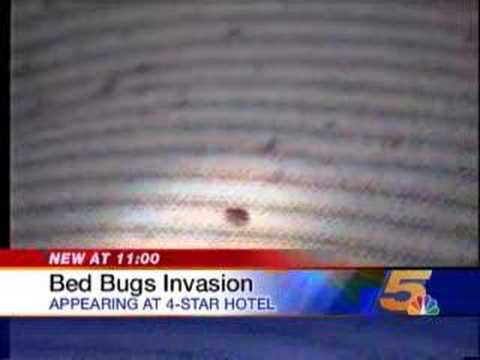 Bed Bugs in Four-Star Hotel