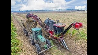 Cane Harvest 2017 with a Case IH Sugarcane Harvester 4K video
