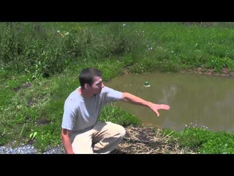 Pond Failure Type 1 Error
