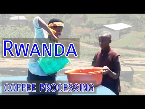 Rwanda Coffee Processing
