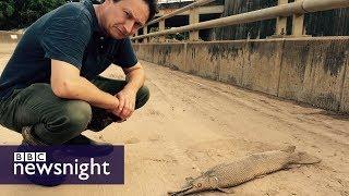 Hurricane Harvey: The aftermath - BBC Newsnight
