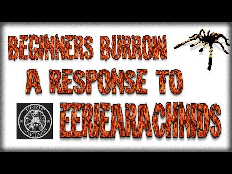 A Response to Eeriearachnids - Beginners Burrow