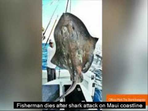 [BEST RECOMMENDATION] Fisherman dies after shark attack on Maui coastline
