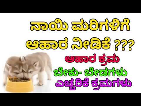 Kannada dog training , how to feed puppy ? How to choose better food for puppies. ನಾಯಿಮರಿಗಳಿಗೆ ಆಹಾರ