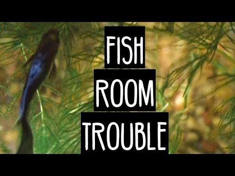 Fish 🐠 Room Trouble