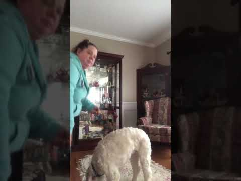 Stage 1 of Training Service Dog Gluten Detection:  Teaching the