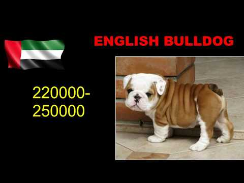 Dog Price List In DUBAI.Be a Exporter &  Earn Lots of Money.