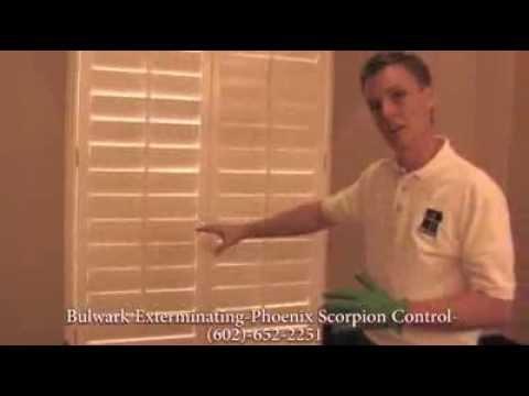 How Do Scorpions Get In Your Bathroom - Phoenix, Arizona Scorpion Control - Bulwark Exterminating