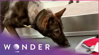 Dog Finds Drugs In Airplane | K9 Mounties S1 EP5