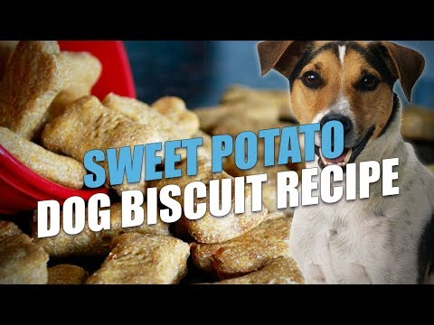 Sweet Potato Dog Biscuit Recipe