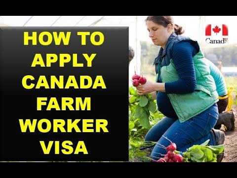 HOW TO APPLY FOR CANADA FARM WORKER VISA