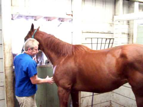 Horse with sore back due to Lyme Disease