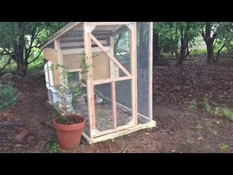 Backyard Chickens - DIY BEST easy to clean, worry-free Chicken Coop!