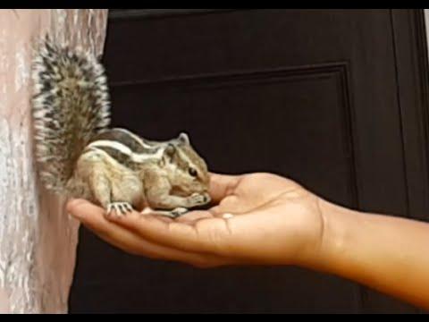 Feeding the squirrel
