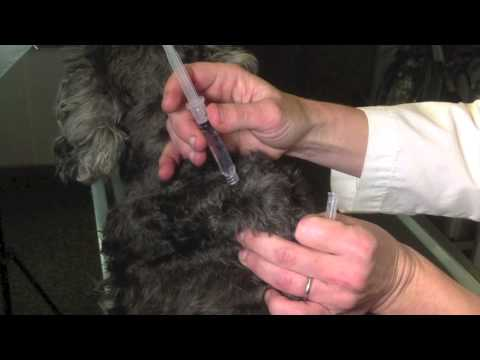 How to Give a Dog or Cat a Shot: It's Easier Than You Think