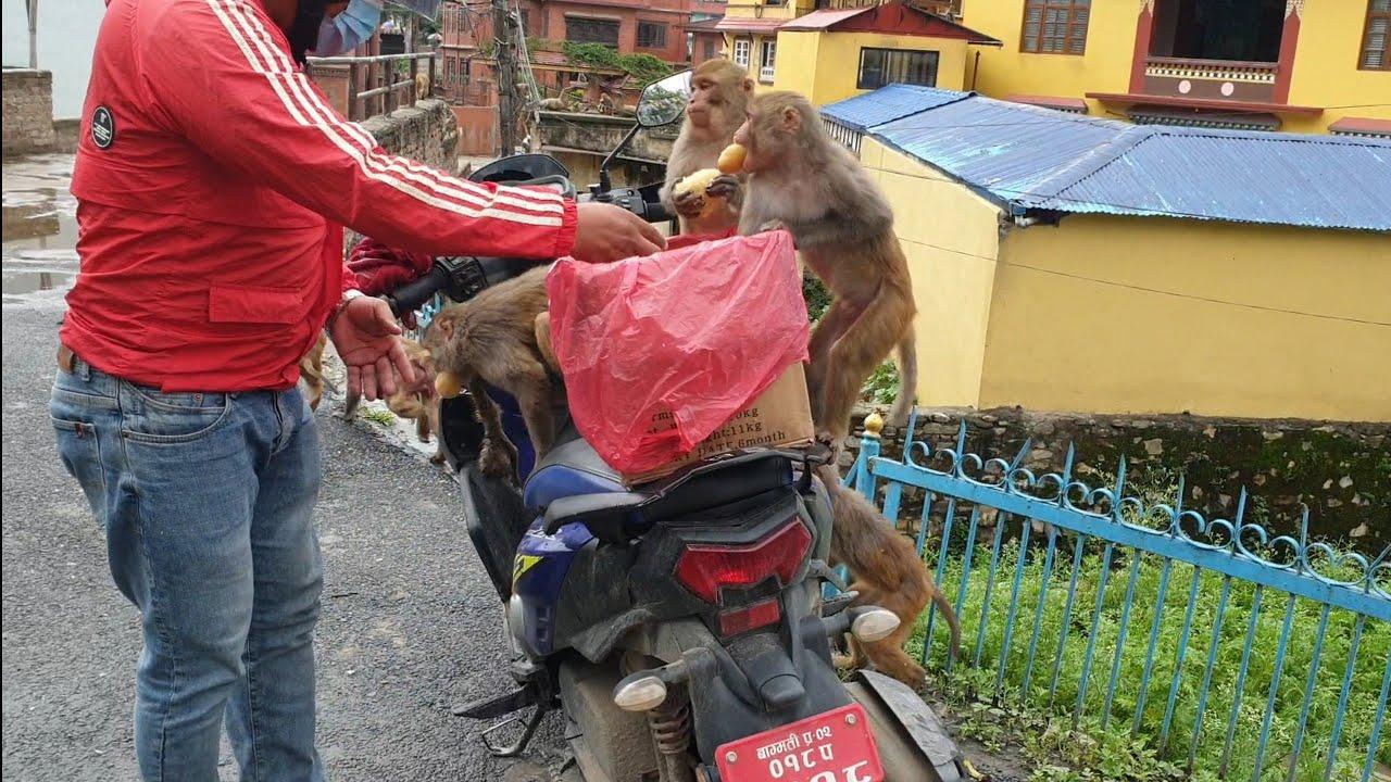 feeding potatoes to the hungry wild monkey || Thank you Rohan Ghale €200 WORK AT UNITED KINGDOM