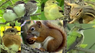 Entertainment Videos For Cats and Dogs To Watch - Chipmunks, Squirrel and Bird Fun