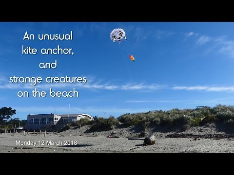 An unusual kite anchor, and strange creatures on the beach