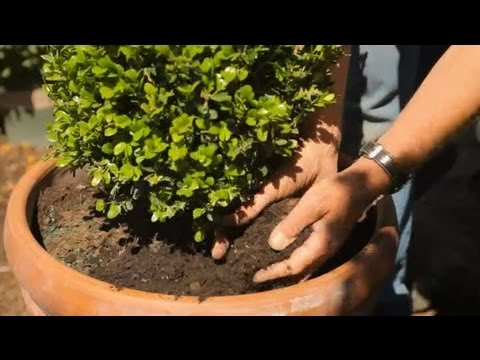 How to Keep Plants Healthy With Proper Gardening Soil : Garden Savvy