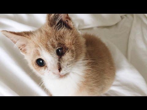 MY NEW KITTEN LOST AN EYE! | MEET MR. NORRIS