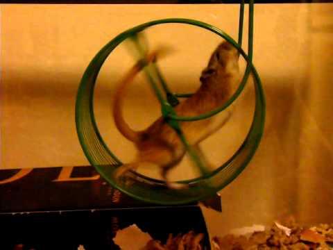 Slow-motion gerbil wheel
