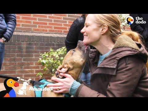 Xxx Mp4 Dog Reunited With Foster Mom For The First Time Since Her Adoption The Dodo Reunited 3gp Sex