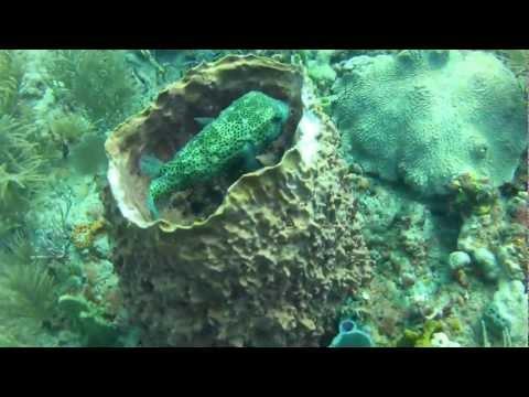 Palm Beach Sea Turtle Observation Dive 2