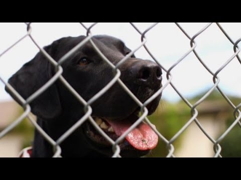 Meet the Bomb-Sniffing Dogs for the 21st Century