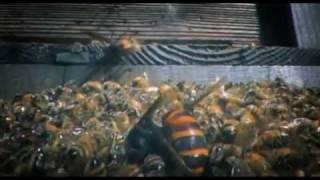 Download 30 Japanese Giant Hornets kill 30,000 Honey Bees Video