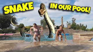 SNAKE IN OUR POOL!!! Feeding a Wild Snake! IT ATE MY PINKY!