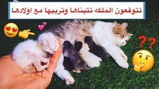 محاولة انقاذ قطة صغيرة يتيمه 😿 حالتها تحزن 😔💔 / Mohamed Vlog