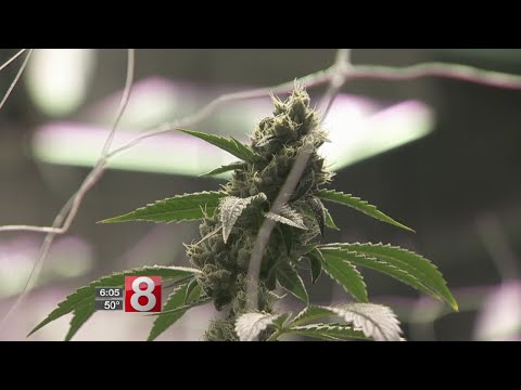 Pot bill advances, advocates say Connecticut can't afford to wait