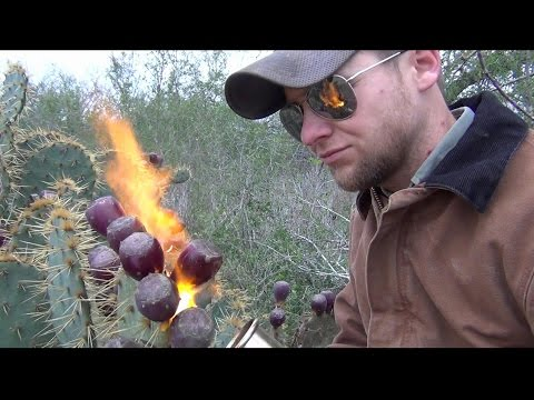 How to Pick and Eat Prickly Pear Fruit