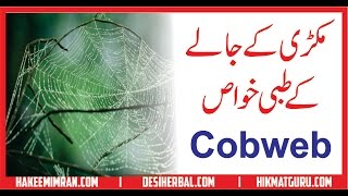 Makri Kay Jalay Kay Tibbi Khawas  مکڑی خا جالا کونسی دوائی بناے کے کام آتا ہے