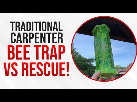 Traditional Carpenter Bee Trap vs RESCUE! Trapstik for Carpenter Bees