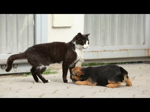 Cats Meeting Puppies for the First Time Compilation (2014)